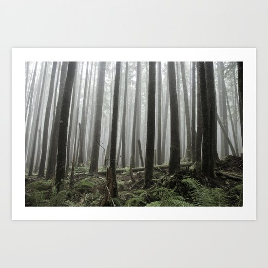 Tall Trees Art Print