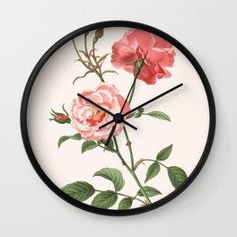 Rosa Semplerflorens Wall Clock
