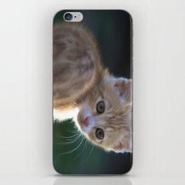 Gatto Rosso - Red Cat iPhone Skin