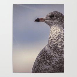 Johnathan Livingston Seagull Poster
