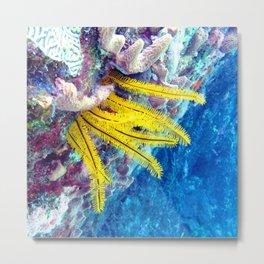 Watercolor Sealife, Golden Crinoid 02, St John, USVI Metal Print