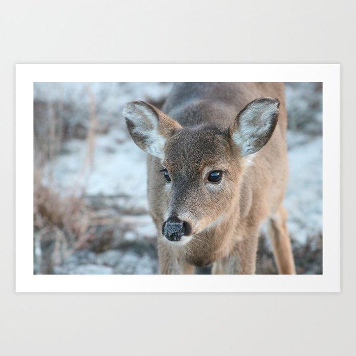 Deer At Fire Island Kunstdrucke