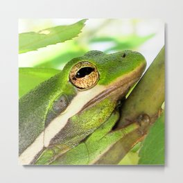 Watercolor Frog, Green Tree Frog 01, Merchants Millpond, North Carolina, One with the Tree Metal Print