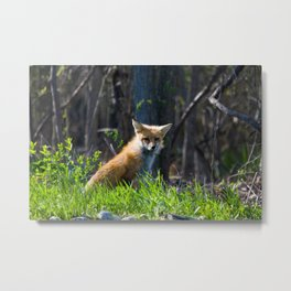 I Am the Fox. Who Are You? Metal Print