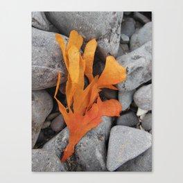 Orange  Seaweed (1) Canvas Print
