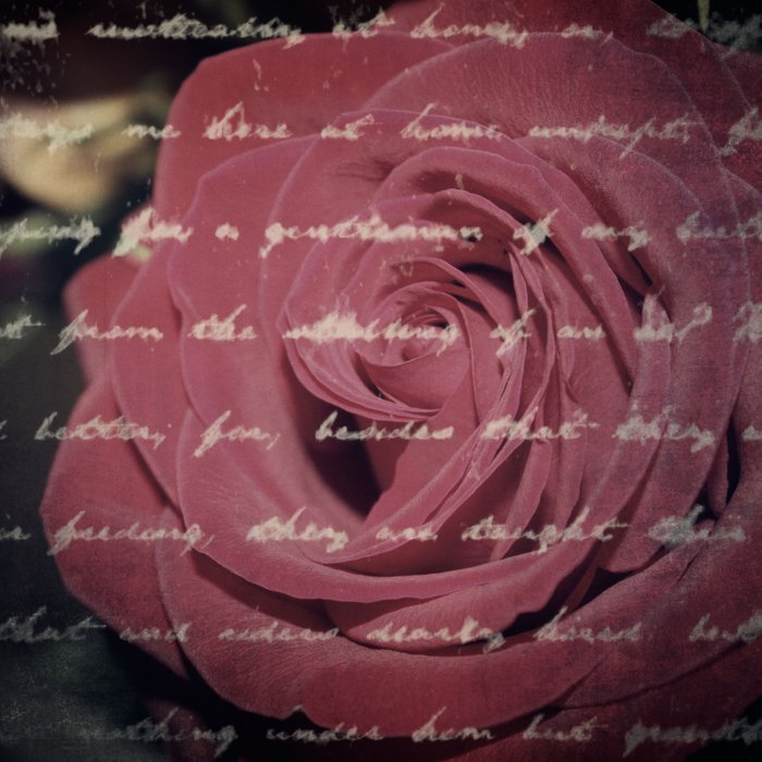 Antique Red Rose with Text Duvet Cover