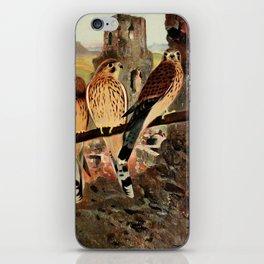 Kuhnert, Friedrich Wilhelm (1865-1926) - Wild Life of the World 1916 v.1 (Kestrel) iPhone Skin