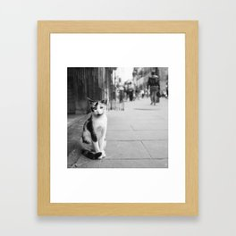 The Cats Collection (2) Framed Art Print