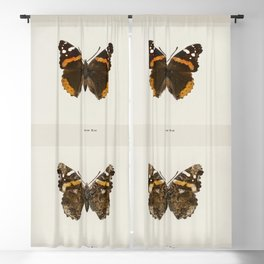 Red Admiral (Pyrameis Atalanta) from Moths and butterflies of the United States (1900) by Sherman F Blackout Curtain