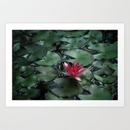 Lost Among the Lily Pads Art Print