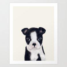 little boston terrier Art Print