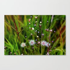 I'd rather be a weed than smell of roses cultured seed Canvas Print