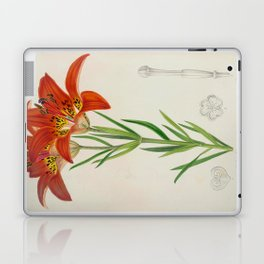 Lilium philadelphicum Vintage Botanical Floral Flower Plant Scientific Laptop & iPad Skin