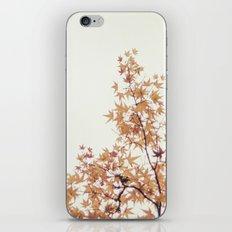 Autumn Stars iPhone & iPod Skin