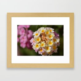 Series Flowers Framed Art Print