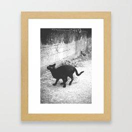 Stray Away  Framed Art Print
