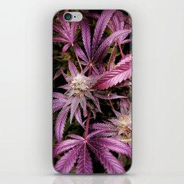 Magenta iPhone Skin