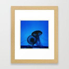 blue jellies Framed Art Print
