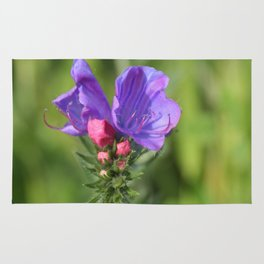 Viper's bugloss blue and pink flowers 2 Rug