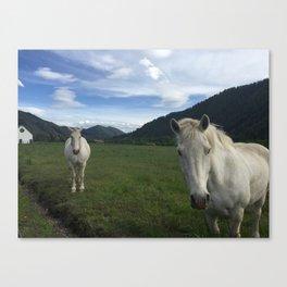 Happy White Horses - Sun Valley, Idaho Canvas Print