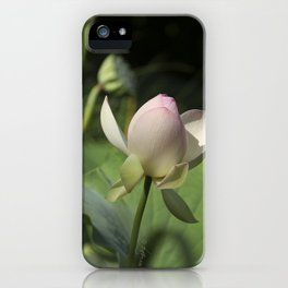 In Delicate Pinks iPhone Case
