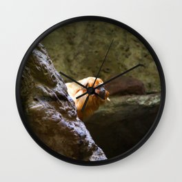 Golden Lion Tamarin looking out Wall Clock