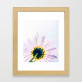 Blooming Daisy Framed Art Print