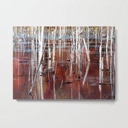 Automn Swamp Metal Print