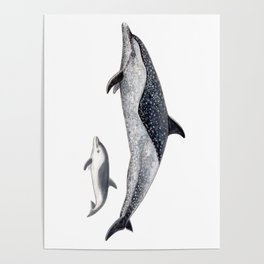 Pantropical spotted dolphin Poster