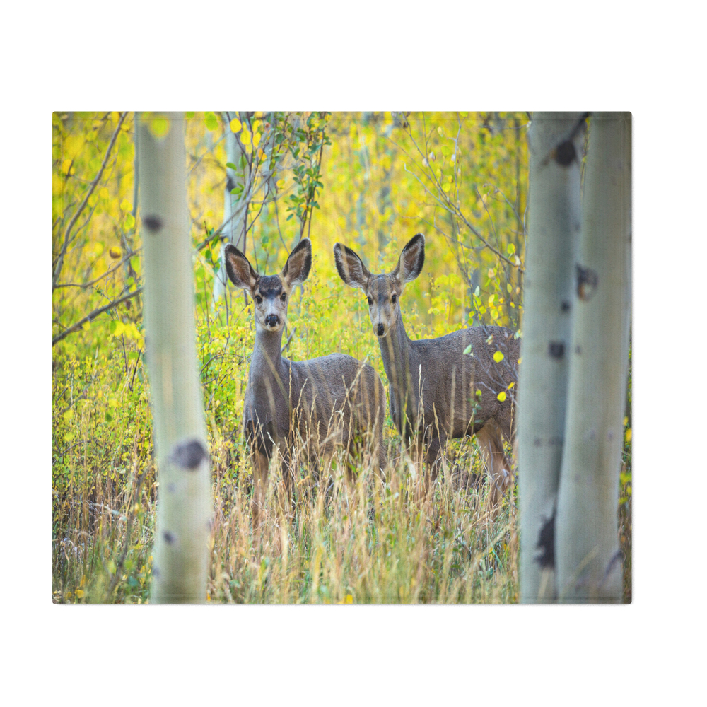 Double_Take__Pair_of_Young_Mule_Deer_Hiding_in_Autumn_Aspens_Throw_Blanket_by_seanramsey