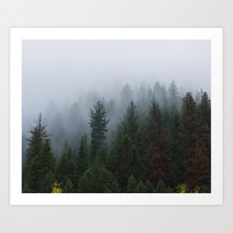 Into the Deep, Foggy, Forest Art Print