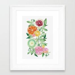 Citrus Fruit Framed Art Print