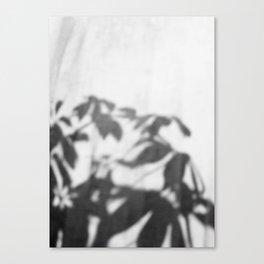 Shadows in curtain Canvas Print
