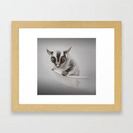 Sugar Glider  Framed Art Print
