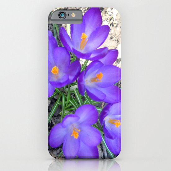 Crocuses iPhone & iPod Case