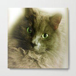Wake up! Time to feed the Cat! Metal Print