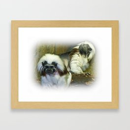 Cotton Top Tamarin Framed Art Print