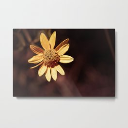 Yellow coneflower/sunflower Metal Print