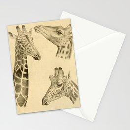 Vintage Illustration of a Giraffe (1908) Stationery Cards