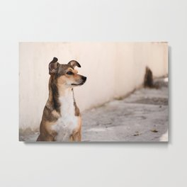 Stray Dog on the Lookout Metal Print