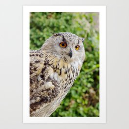 Eagle Owl with glowing eyes Art Print