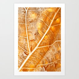 Burning Bokeh Leaf Art Print