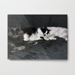 3 cats lounging Metal Print