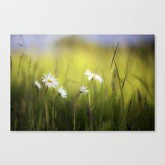Daisy Landscape Canvas Print