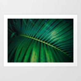 Green Leaf Palm Frond Photo Art Print