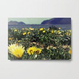 Seaside flowers Metal Print