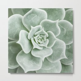 Succulent Plant. Close up view. View from top Metal Print