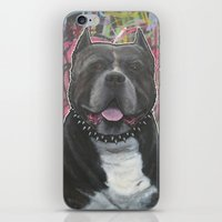 pitbull iPhone & iPod Skins featuring pitbull by stef-w