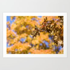 Autumn Orange Backdrop Art Print