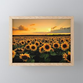 Sunflower field Framed Mini Art Print
